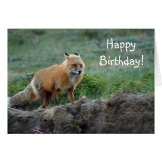 Wild Fox Animal Wildlife Card