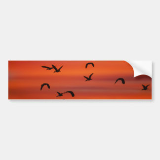Wild geese flying at sunset bumper sticker
