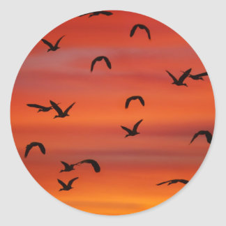 Wild geese flying at sunset classic round sticker
