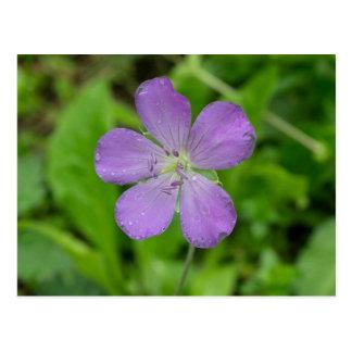 Wild Geranium Wildflower Floral Postcard