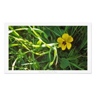 """Wild Life,"" Floral Decor Photo"