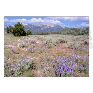 Wild Lupin in the Idaho High Desert. Card