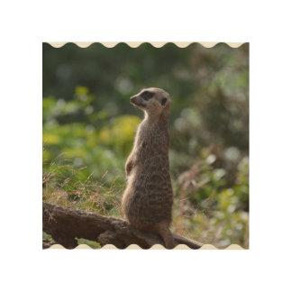 Wild Meerkat Wood Print