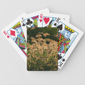 Wild Millet (Panicum Sp.) Growing In Wetland Bicycle Playing Cards