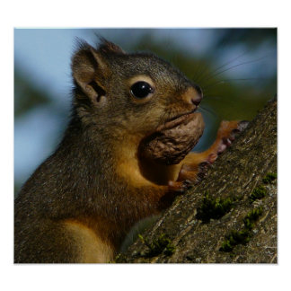 Wild Squirrel Photo Poster