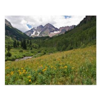 Wildflower Meadow with Maroon Bells Postcard
