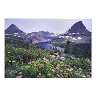 Wildflowers and Hidden Lake Shrubby Photographic Print