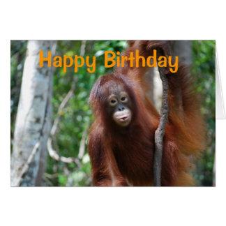 Wildlife Happy Birthday Cards