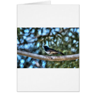 WILLIE WAGTAIL AUSTRALIA WITH ART EFFECTS CARD
