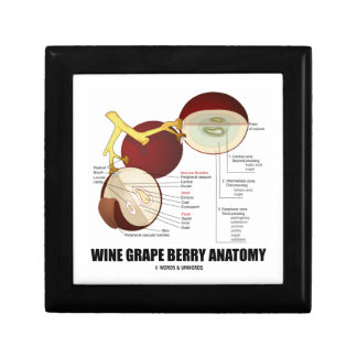 Wine Grape Berry Anatomy Scientific Diagram Gift Box
