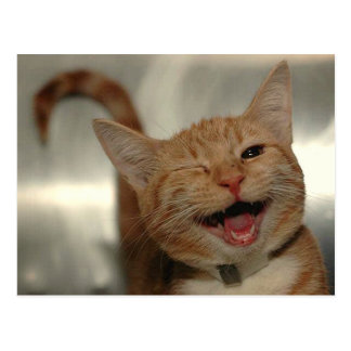 Winking Happy Ginger Cat Postcard