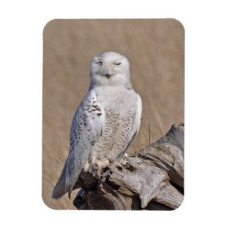 Winking Snowy Owl Magnet