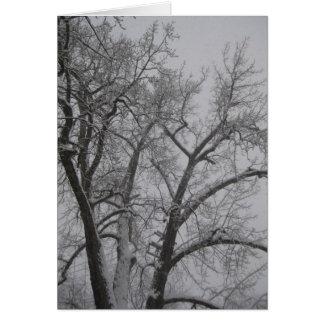 Winter cottonwood card