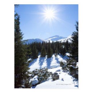 Winter sun 5 postcard
