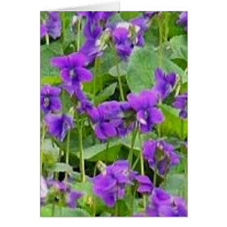 Wisconsin Wood Violets Card
