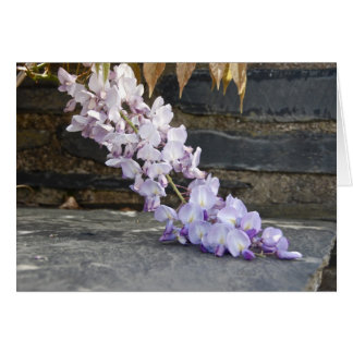 Wisteria at the Cloisters Card