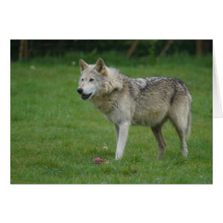 Wolf at Woburn Safari Park Card