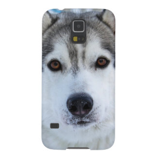 wolf face photo samsung galaxy S5 case