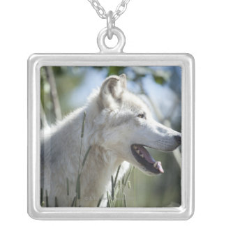 Wolf in Yellowstone 2 Silver Plated Necklace