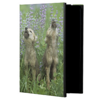 Wolf Puppies Howling In Meadow iPad Air Case