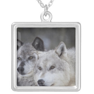 Wolves (Canus lupus) from West Yellowstone. This Silver Plated Necklace