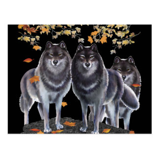 Wolves In Fall Postcard