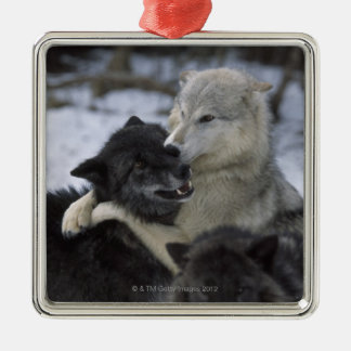 Wolves in the Snow | Montana, USA Christmas Ornament