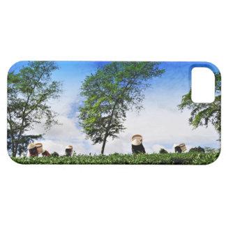 Women Harvesting Tea iPhone 5 Cases