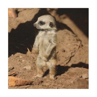 Wonderful Cute Sweet African Meerkat Animal Wood Wall Art