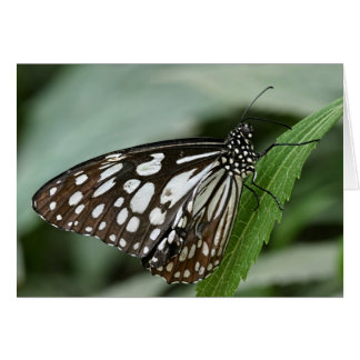 Wood Nymph Butterfly - Greeting Card