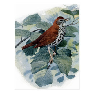 Wood Thrush on a Twig Postcard