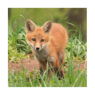 wood wall art with photo of red fox kit