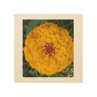 Wooden frame and Base with Yellow Zinnia Picture Wood Wall Decor