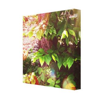 "Woodland Mystics in Maine 12"" x 12"", 1.5"", Single Canvas Print"