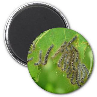 wriggling caterpillars magnet