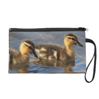 Wristlet with Baby Mallard Ducks