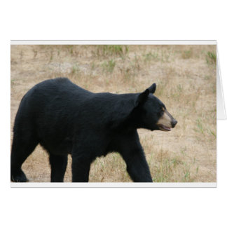 www blackbearsite com greeting card