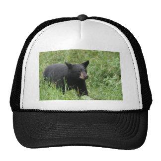 www blackbearsite com hat