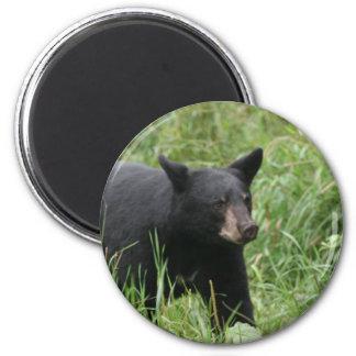 www blackbearsite com magnet