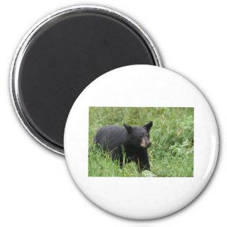 www blackbearsite com refrigerator magnet