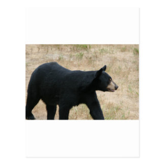 www blackbearsite com postcard