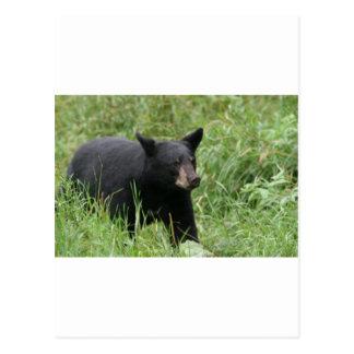 www blackbearsite com postcards