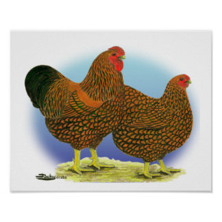 Wyandotte:  Golden-laced Pair Poster