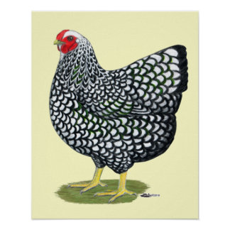 Wyandotte:  Silver-laced Hen Posters