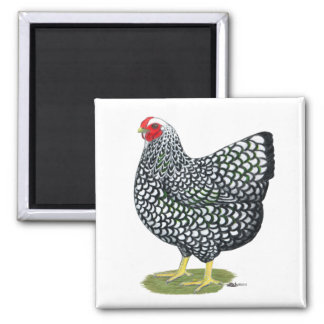 Wyandotte:  Silver-laced Hen Square Magnet