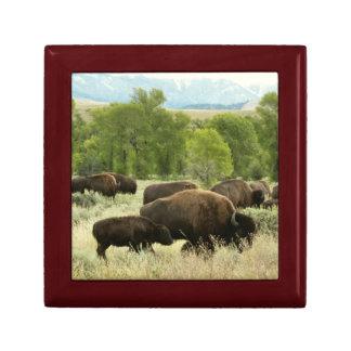 Wyoming Bison Nature Animal Photography Gift Box