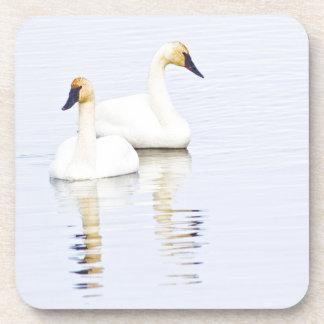 Wyoming, National Elk Refuge, Trumpeter Swan 2 Coaster