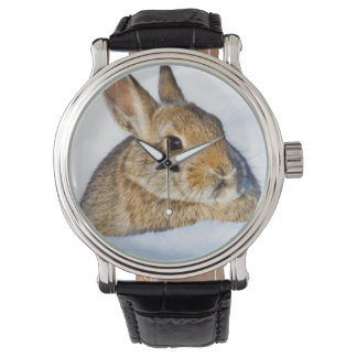 Wyoming, Sublette County, Nuttall's Cottontail 1 Watch