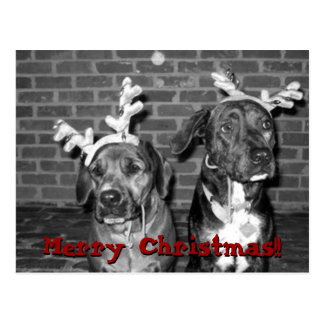 xmas card recrop recontrast, Merry Christmas!!,...