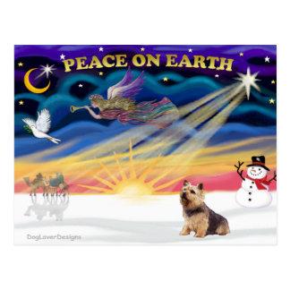 Xmas Sunrise - Norwich Terrier Postcard